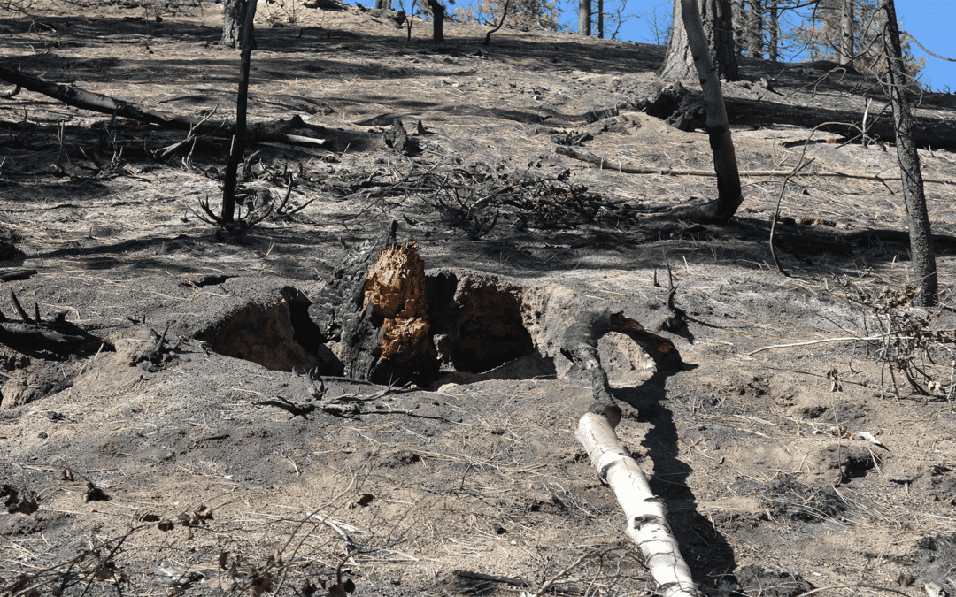 Pioneer Fire Restoration Project